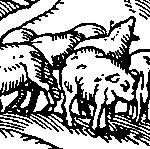 Janvier illustration cochons