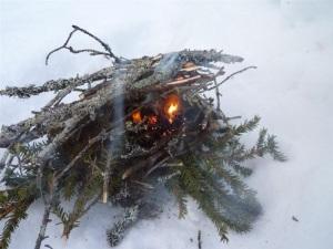ild dry xmas tree