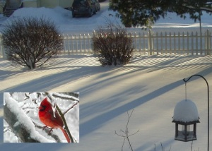 voyant rouge cardinal 3